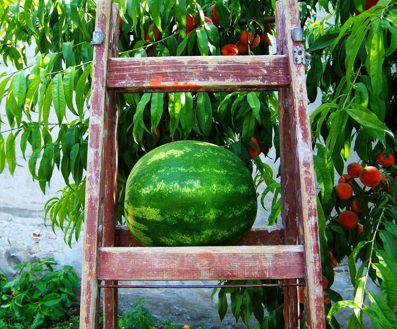 melon-870481_1280