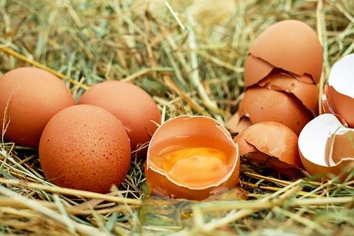 egg-1510449__340